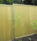 Jacksons tongue and groove panel fence